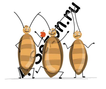 Тараканы Волоколамск